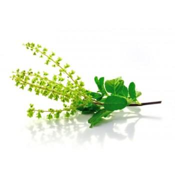 tulsi-herbal-tea
